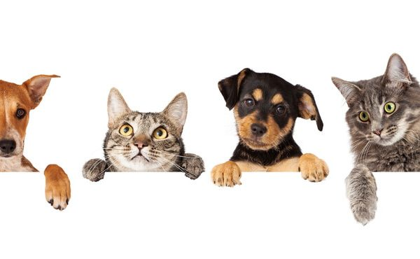 2 cats and 2 dogs with a white background